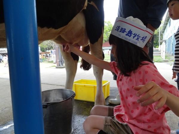 淡路島牧場で乳しぼり体験02