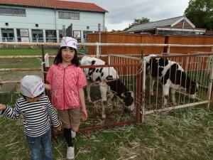 淡路島牧場で牛とたわむれ01