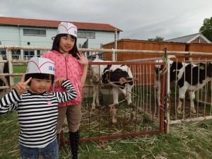 淡路島牧場で牛とたわむれ02