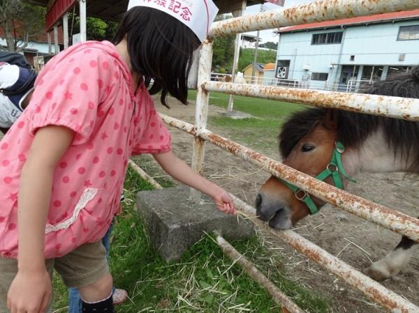 淡路島牧場で牛とたわむれ03