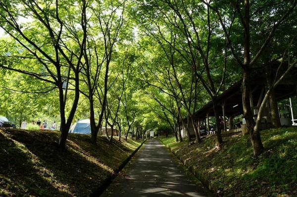 美山町自然文化村キャンプ場-フリーサイト3-02