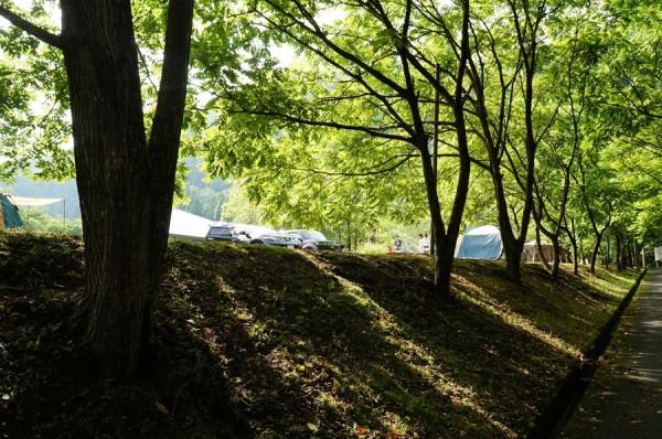 美山町自然文化村キャンプ場-フリーサイト3-03