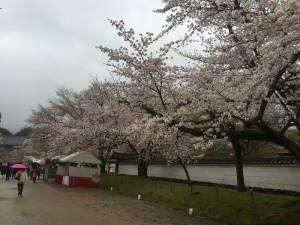 醍醐寺-桜-花見01