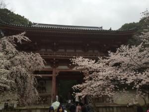 醍醐寺-桜-花見05