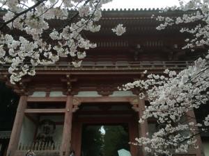 醍醐寺-桜-花見06