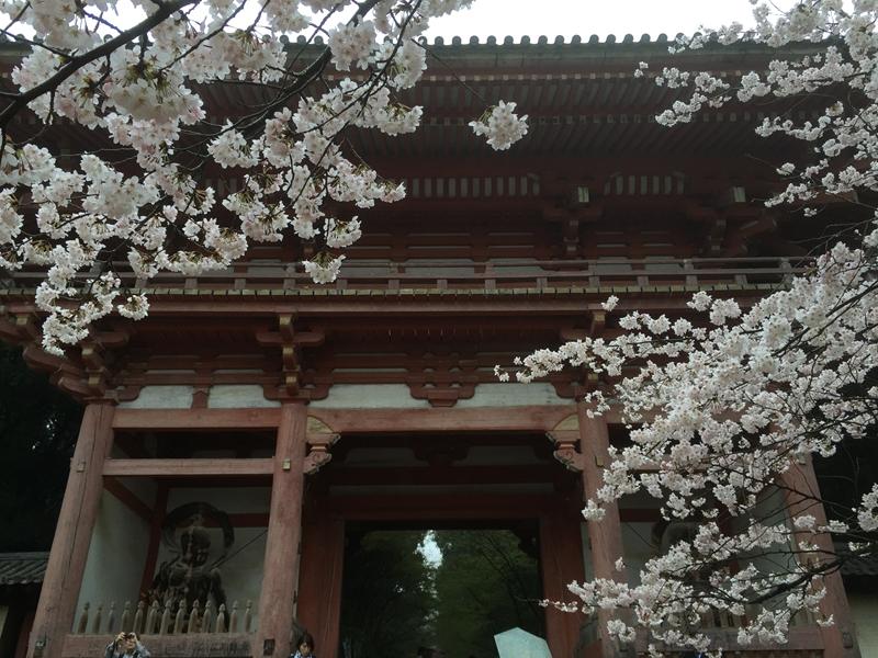 2015年ことしの春は雨ばかり…醍醐の花見を堪能した。