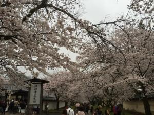 醍醐寺-桜-花見08