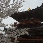 2015-04-01-1332-宇治-平等院-桜34