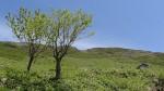 2014-05-18-1103-伊吹山-登山-17