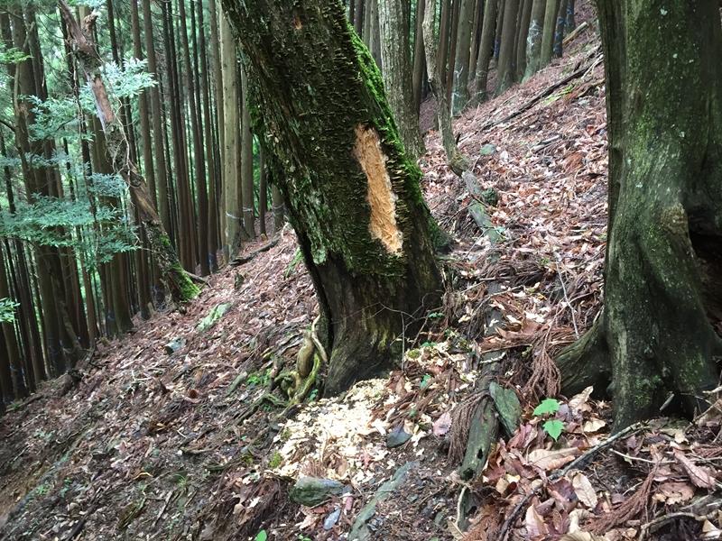 20150620-1115-武奈ヶ岳-登山24