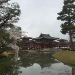 2015-04-01-1330-宇治-平等院-桜32