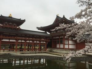 2015-04-01-1402-宇治-平等院-桜57