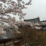 2015-04-01-1357-宇治-平等院-桜41
